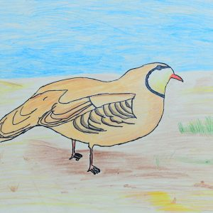 Our national Bird