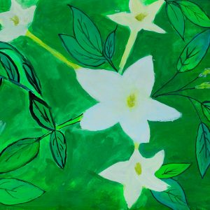I have drawn Jasmine-- National flower of Pakistan